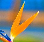 Floral Photography :