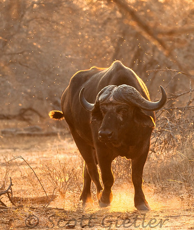 kruger park photography tips