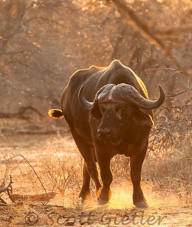 Kruger park safari logistics and wildlife photography tips