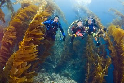 kelp forest, san clemente island