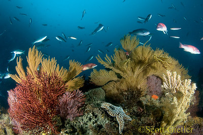 reef scene at catalina island