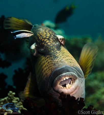 raja ampat marine life