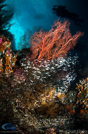 raja ampat wide angle underwater photography