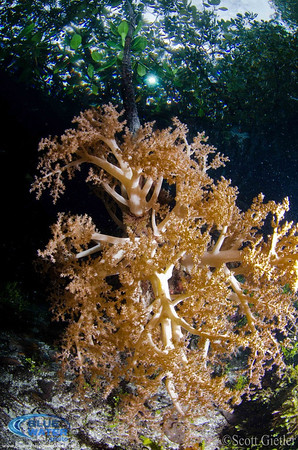 raja ampat mangroves underwater photo