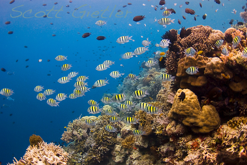 Siladen coral reef photo
