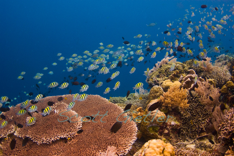 Reef scene at Siladen Island