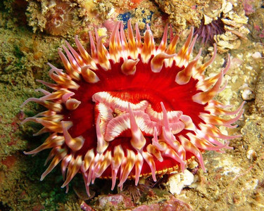 underwater anemone