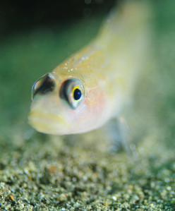 macro underwater photography example, narrow depth of field