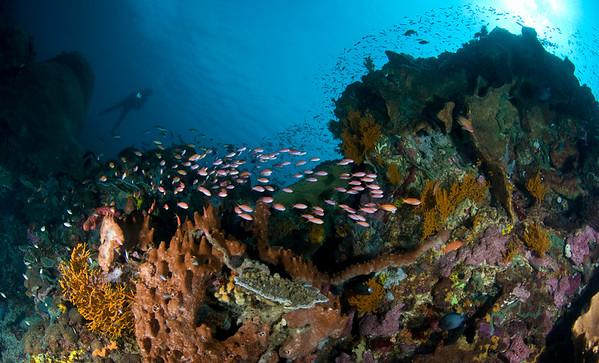 Reef at Nusa Peneda, Bali