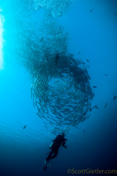 Tornado-like school of Jacks at the Liberty wreck, Bali